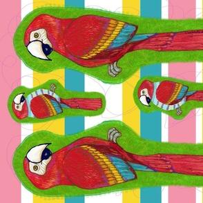 arara- the macaw