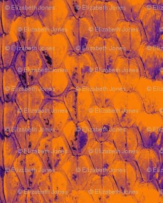 Snakeskin_Orange_and_Purple