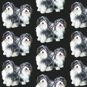 Rrhavanese2_shop_thumb