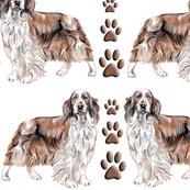 Rrrrwelsh_springer_spaniel__shop_thumb