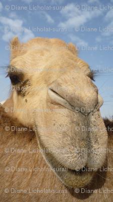 Arabian Camel Stripe