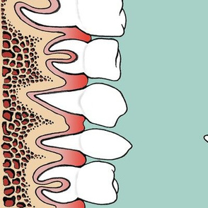Teeth in gums border