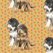 Rrrrtibetan_mastiff_puppies2_shop_thumb