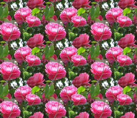 Rose crazy fabric by anniedeb on Spoonflower - custom fabric
