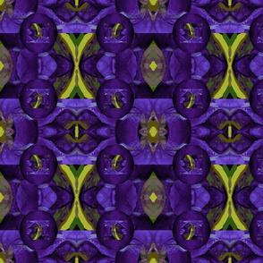Iris unhinged