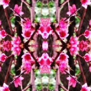 peach blossom confusion
