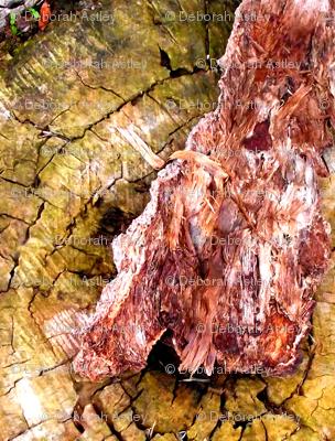 Hint of Moss