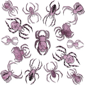 Radial Spider Pattern