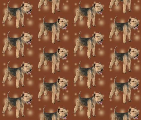 Lakeland_Terrier