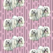 Rrcontondetulear_shop_thumb