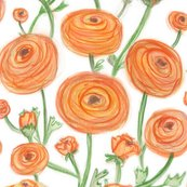 Rrrrpattern-orange-ranunculus4_shop_thumb