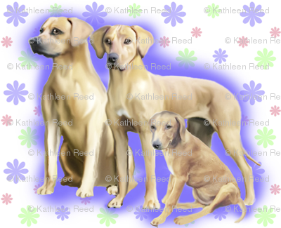 Rhodesian Ridgeback repeating
