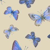 Rrrr0_extinct_butterflies3b_toss_shop_thumb