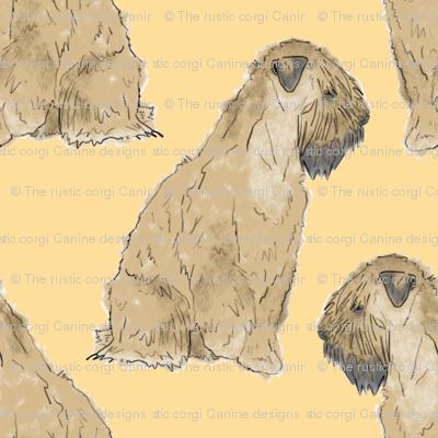 Sitting Wheaten Terriers - gold
