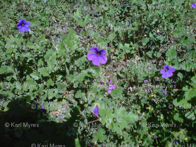 purple flowers on green