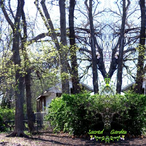 sacred garden fabric by paragonstudios on Spoonflower - custom fabric