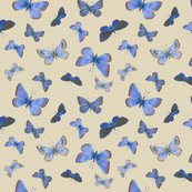 Rrr0_extinct_butterflies3b_toss_shop_thumb