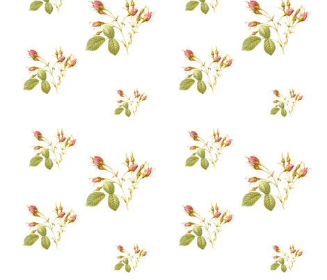 RoseBud  in Pink on White  fabric by lilyoake on Spoonflower - custom fabric