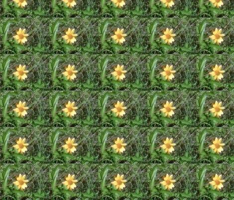 Rrimg00610-20120324-1510_ed_shop_preview