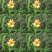 Rrimg00610-20120324-1510_ed_shop_thumb