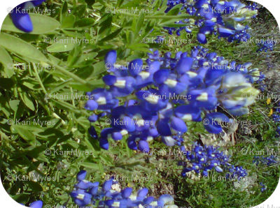 blue bonnets with white diamonds