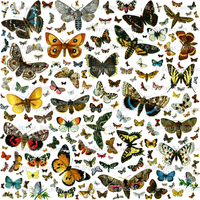 Large Butterfly Collage