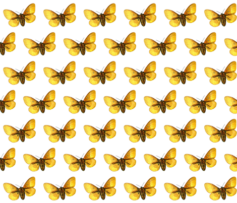 Butterfly Bombyx quercus  fabric by zephyrus_books on Spoonflower - custom fabric
