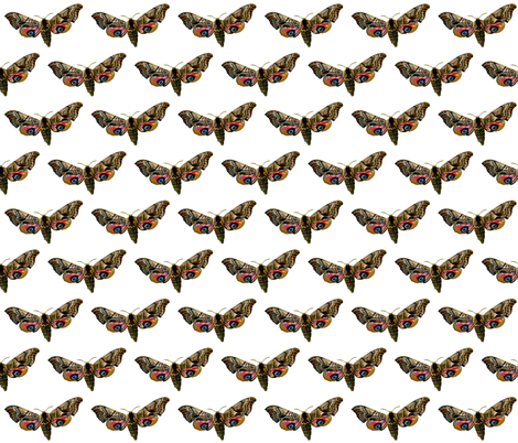 Moth Smerinthus ocellata - Butterfly  fabric by zephyrus_books on Spoonflower - custom fabric