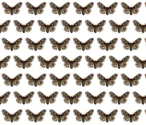 Moth Saturnia pavonia (female) Butterfly fabric by zephyrus_books on Spoonflower - custom fabric