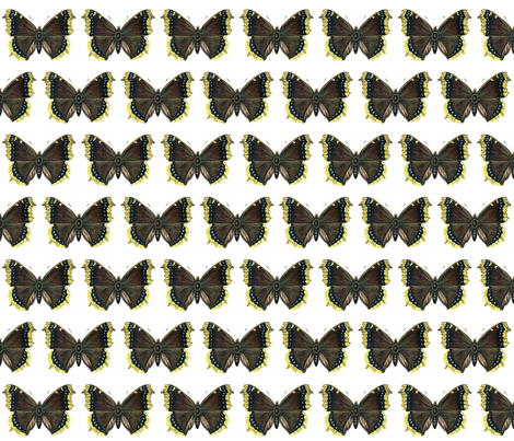Butterfly Nymphalis antiopa fabric by zephyrus_books on Spoonflower - custom fabric