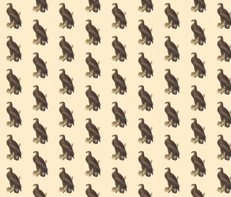 The Bald Eagle - Bird / Birds of Prey