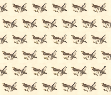 Northern Goshawk - (Hawk) Bird / Birds of Prey fabric by zephyrus_books on Spoonflower - custom fabric