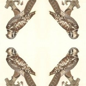 Northern Hawk Owl - Vintage Bird / Birds of Prey Print