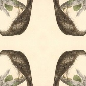 The Red-tailed Hawk - Bird / Birds of Prey