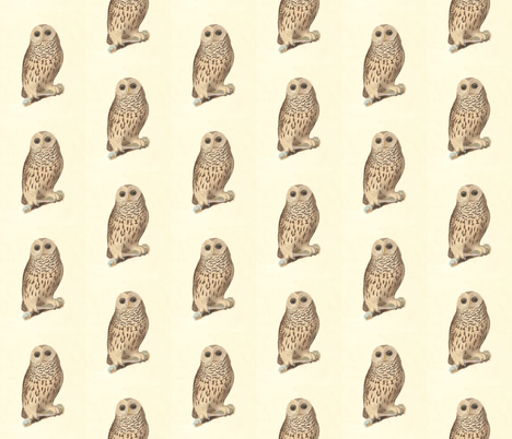 The Barred Owl - Vintage Bird / Birds of Prey Print fabric by zephyrus_books on Spoonflower - custom fabric