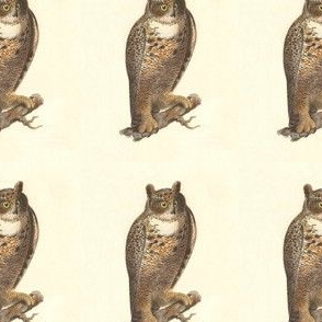 The Great Horned Owl - Vintage Bird / Birds of Prey Print
