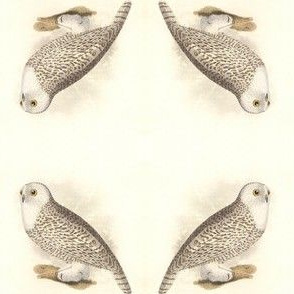 Snowy Owl - Vintage Bird / Birds of Prey Print