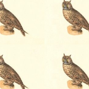 The Long-eared Owl - Vintage Bird / Birds of Prey Print
