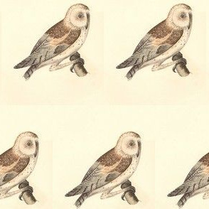 The American Barn Owl - Vintage Bird / Birds of Prey Print