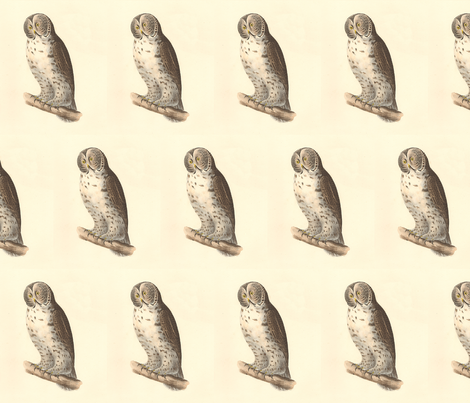 The Great Grey Owl - Vintage Bird / Birds of Prey Print fabric by zephyrus_books on Spoonflower - custom fabric
