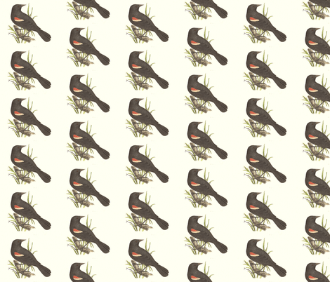Red-winged Blackbird - Bird / Birds