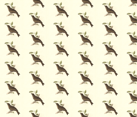 The Wood Pewee - Bird / Birds fabric by zephyrus_books on Spoonflower - custom fabric