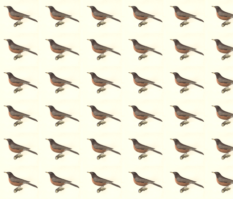 North American Robin - Bird / Birds fabric by zephyrus_books on Spoonflower - custom fabric