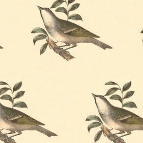 The Solitary Greenlet - Bird / Birds