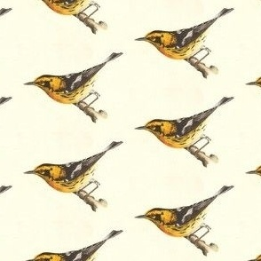 The Blackburnian Warbler - Bird / Birds