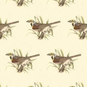 The Black-throated Bunting - Bird / Birds