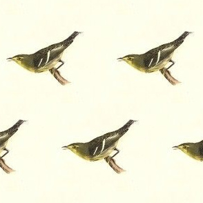 The Hemlock Warbler - Bird / Birds