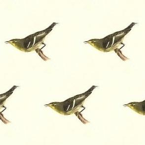The Hemlock Warbler - Bird / Birds