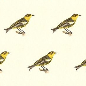 The Cape-May Warbler - Bird / Birds