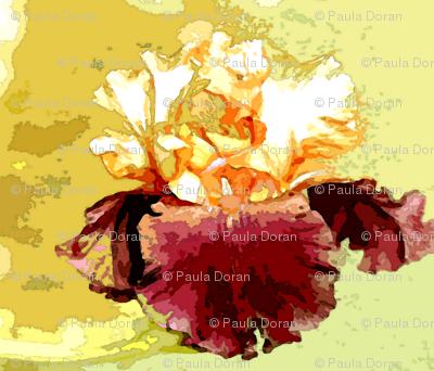 bearded iris watercolor